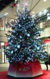 Christmas20081130